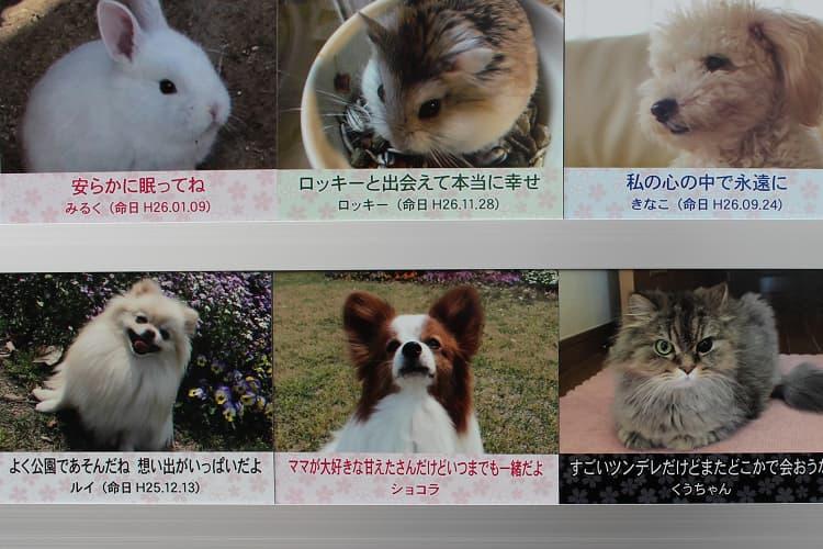 SPのメインビジュアル1 大阪のペット火葬はさくらペットセレモニー